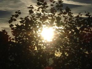 Platz an der Sonne